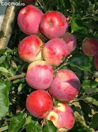 Pomi fructiferi altoiti categoria i