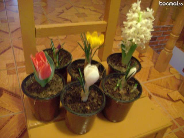 Flori 1/ 8 martie [branduse lalele zambile]