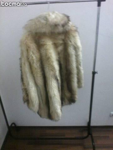 Haina de blana de vulpe aurie